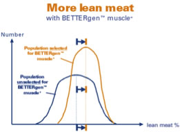 More lean meat